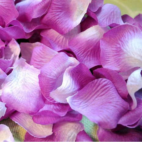 Enchanting wedding Rose Petals